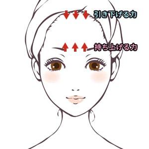 前頭筋がもつ機能の説明